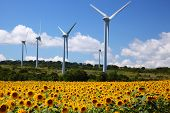 image of fukushima  - Sunflower field with windmill in Fukushima Japan - JPG