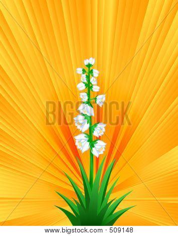 Yucca In Sunshine