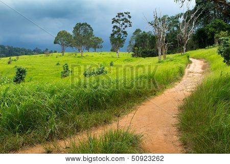 Tropical meadow under dramatic stormy sky in Khao yai national park, Thailand