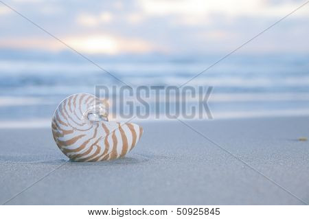nautilus shell on beach, pale sunrise light and  tropical sea