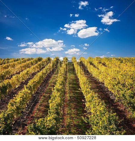 Port Wine Vineyards In Portugal