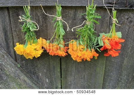 Fresh tagetes,marigold, nasturtium,calendula hanging for drying