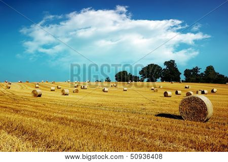 Hay bale harvesting in golden field landscape
