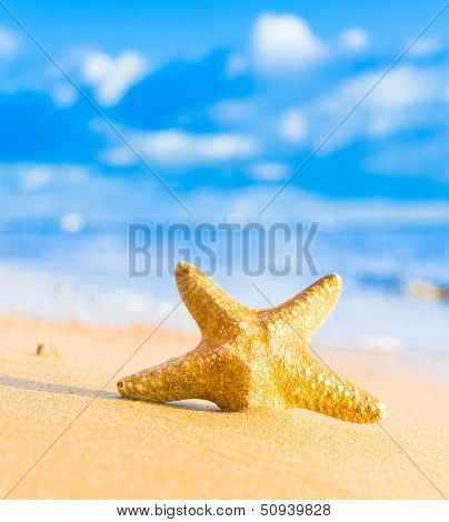 Under the Sun Sea Starlet