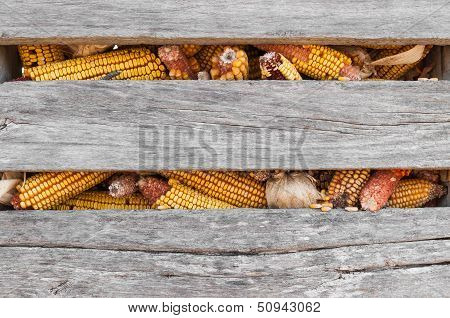Corn Crib Closeup
