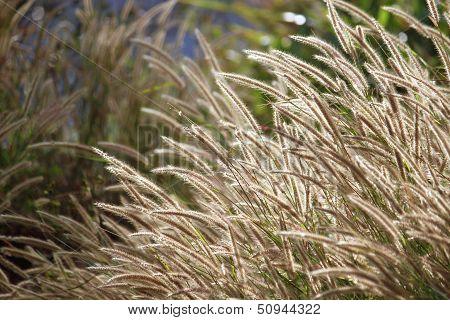 flower of the grass.