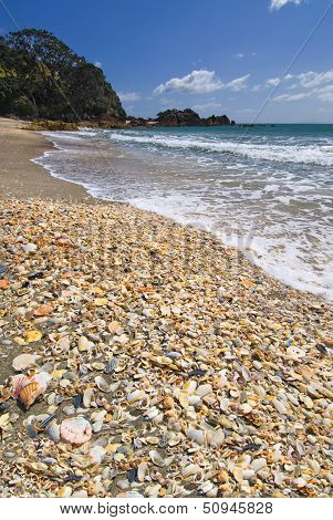 Sea shells on main beach at Mt Maunganui, Bay of Plenty, North Island, New Zealand