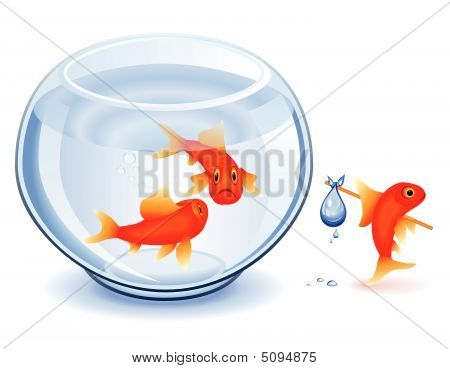 Goldfish Emancipation