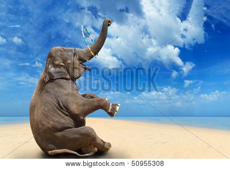 Elephant having fun on the beach