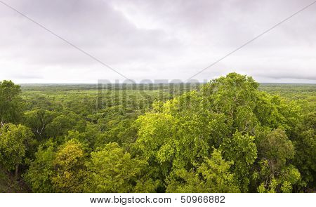 Virgin forest of Ek Balam, Yucatan, Mexico