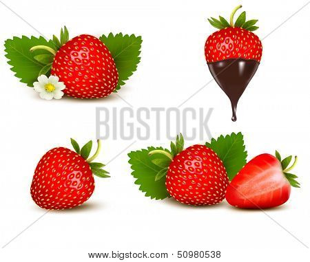Set of ripe sweet strawberry and flower with leaves and chocolate. Vector.