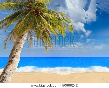 Paradisiac beach with sea and coconut palm tree
