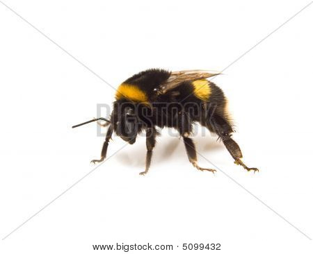 Going Bumble-bee
