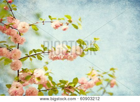 branches with beautiful pink flowers against the blue sky. Amygdalus triloba. Added paper texture.