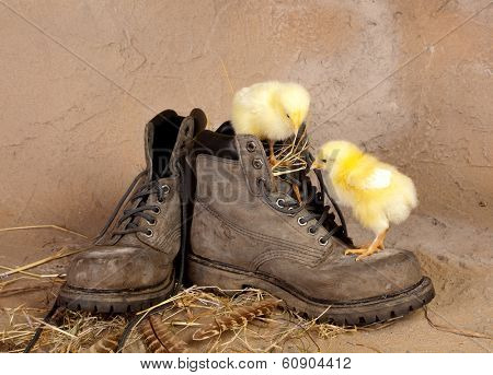 Boot climbing easter chicks against a grunge background