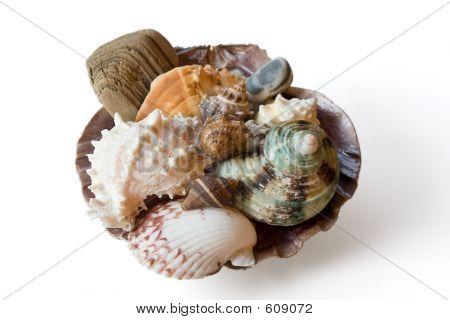 Set Of Sea Sheells