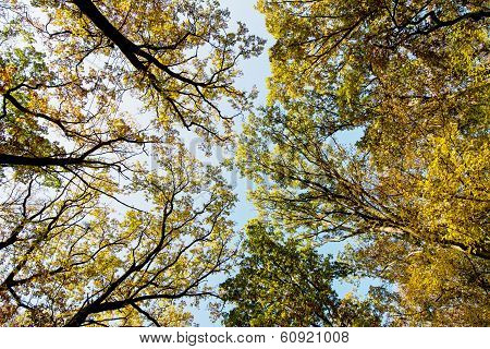 Autumn Treetops With Bright Sky