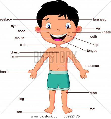 Cartoon vocabulary part of body