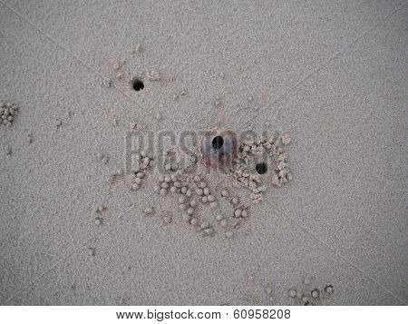 Sand crab home