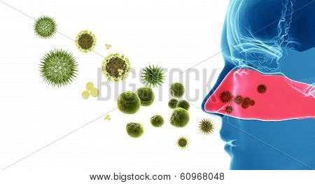 Pollen Allergy / Hay Fever