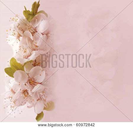 Floral card with blossom cherry