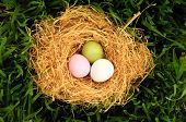 Ping, green and white easter eggs in a nest