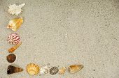 Corner with many different seashells.