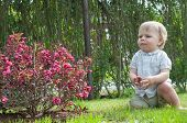 image of nea  - Little cute baby boy sitting nea pink bush - JPG