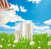 Concept of fresh milk pouring into glass in grass with blooming chamomiles. Blue sky with clouds on