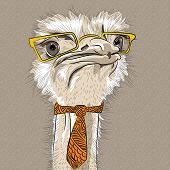 picture of camel  - sketch closeup portrait of funny Ostrich Bird hipster in ryellow eyeglasses and tie - JPG