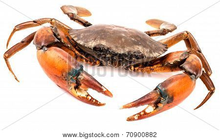 Raw Black Crab In Isolated On White Background