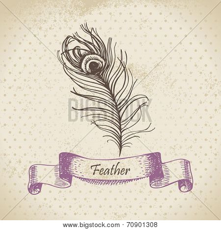 Vintage background with peacock feather. Hand drawn illustration