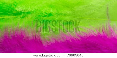 Pink And Green Feather Background, Close Up