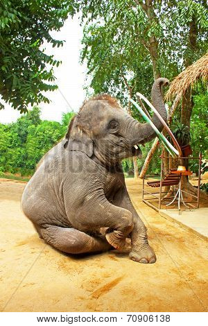 Elephant Plays Hula Hoop, Thailand