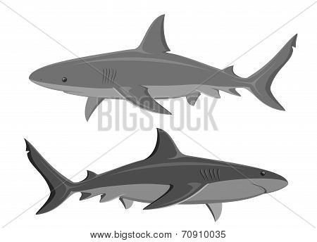 Sharks. Set of two large sharks isolated on white. Vector.