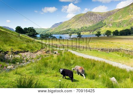Summer Lake District Buttermere Cumbria England uk with herdwick sheep
