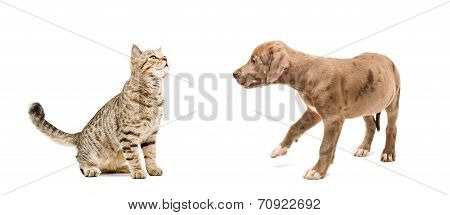 Meeting cat and puppy