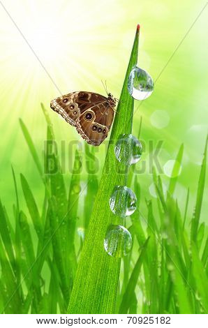 morning dew and butterfly
