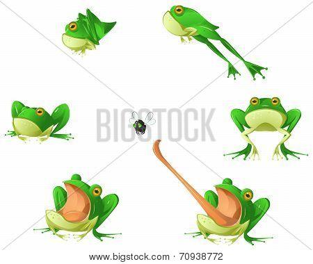 Frog Cartoon Design Element Set