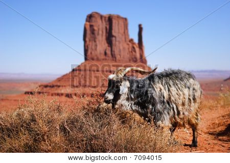 Goats At Monument Valley