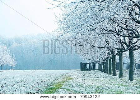 Frost and snow covered landscape