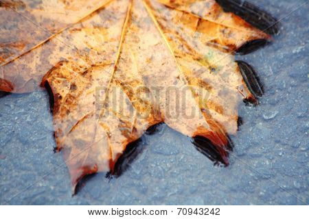 Fallen yellow leaf on the water in autumn