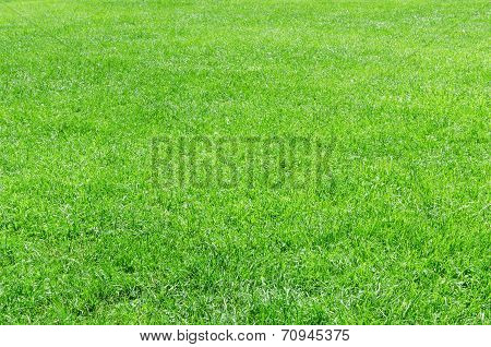 Sunlight Fresh Natural Grass Background