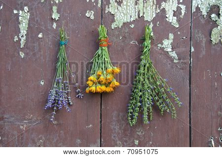 Medical Herbs Bunch On Old Wooden Wall