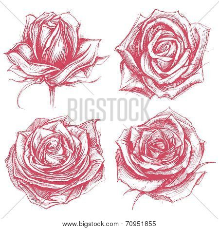 Roses Drawing set