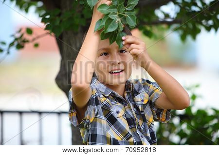Young boy under a tree