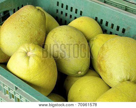 The closeup of pomelo fruit