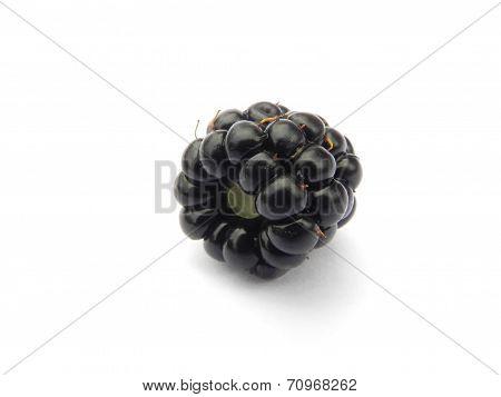 Ripe Blackberry.