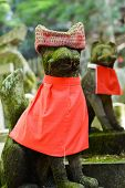 stock photo of inari  - Stone fox  - JPG