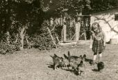 picture of poultry  - Vintage photo of little girl feeding poultry  - JPG